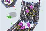 Robot DNA có thể tiêu diệt các tế bào ung thư