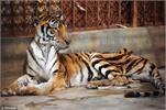 Ra mắt chương trình Liên minh bảo vệ động vật hoang dã