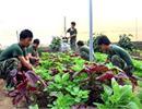 Ứng dụng khoa học để trồng rau trên đảo Phú Quý