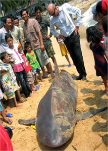 Lắp đặt hệ thống cảnh báo cá mập ở Bình Định
