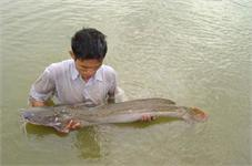 Sản xuất giống cá Lăng chấm bằng sinh sản nhân tạo