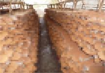 Hưng Yên sản xuất, chế biến nấm ăn, nấm dược liệu